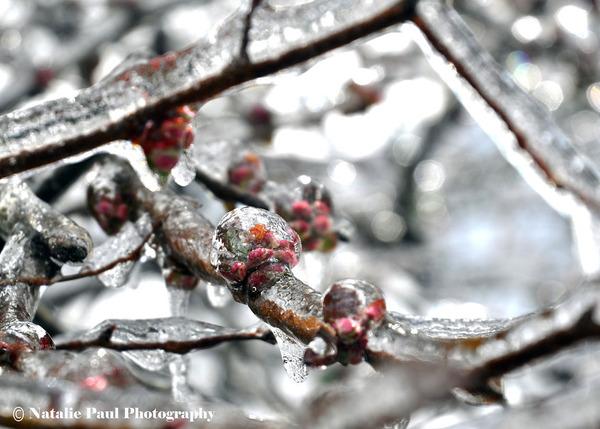 氷霧の後の花10