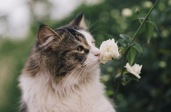 くんくん良い香り。花の匂いを嗅ぐ動物たちの画像 (31)