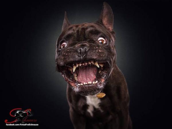 ハングリー精神!犬が獲物を食らう瞬間の静止画像がヤバイ (2)