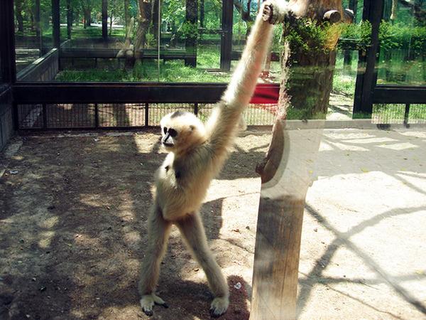 モデルのようにポーズを取る可愛い動物特集 ナマケモノ