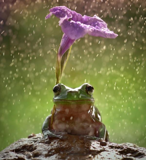 自然の傘を差す動物 15