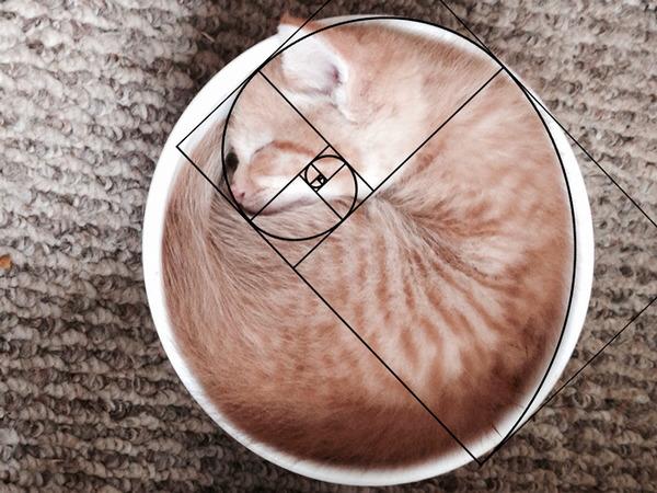 猫と黄金比の関係画像!猫の美しさの秘訣は黄金比にあり (13)