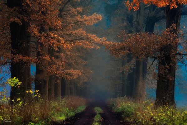 秋といえば紅葉や落葉の季節!美しすぎる秋の森の画像20枚 (11)