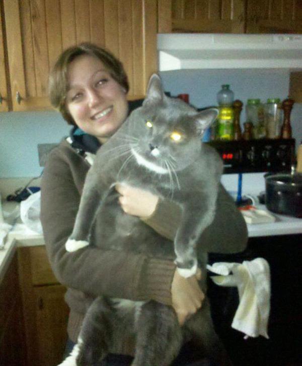 とても大きい猫の画像 29