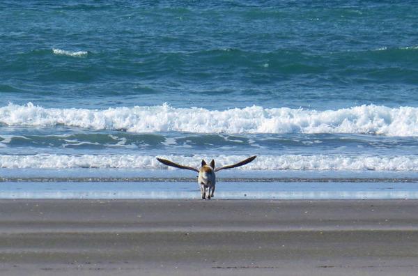 犬は翼を得た