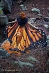 優雅に空を羽ばたきたいな。蝶の羽根模様のスカーフデザイン
