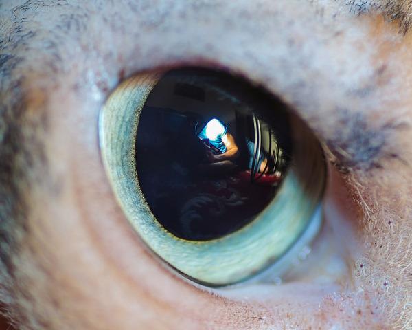 まさにキャッツアイ!綺麗な猫の瞳を撮影した画像16枚 (10)
