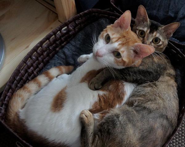 猫のバレンタインデー!【猫ラブラブ画像】 (59)