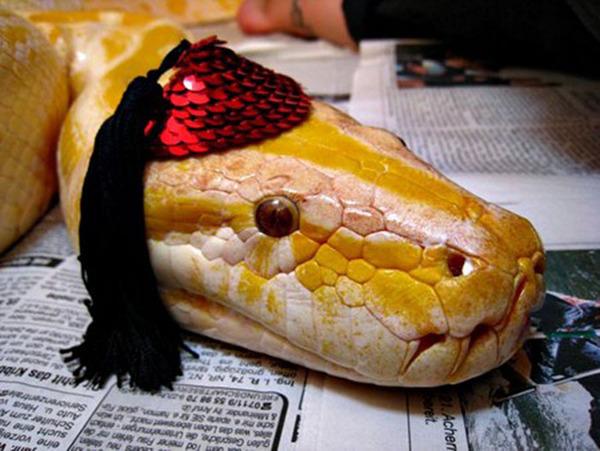 なんだこれカワイイぞ!帽子を被ったヘビ画像特集 (21)