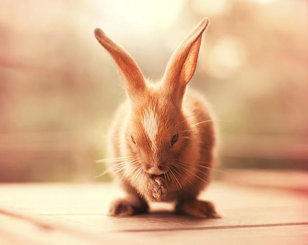 ナマステウサギ