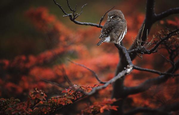 紅葉や秋の森の中を楽しむ動物たちの画像 (21)