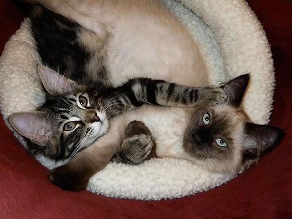 猫のバレンタインデー!【猫ラブラブ画像】 (26)