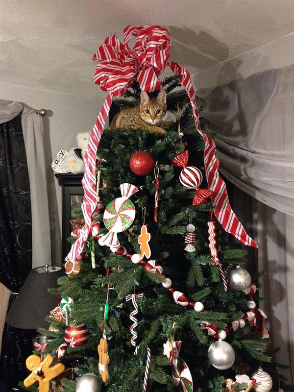 猫、あらぶる!クリスマスツリーに登る猫画像 (26)