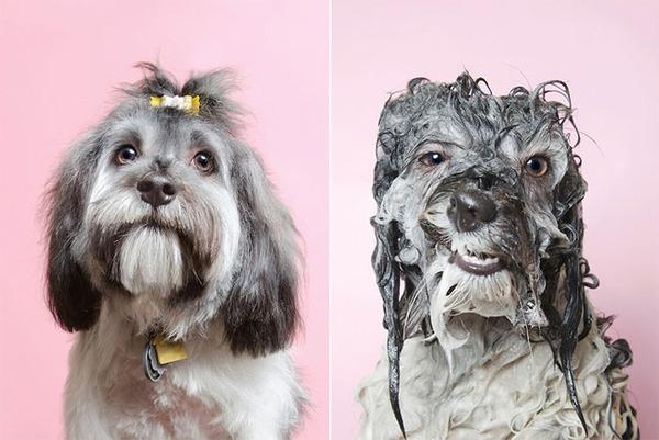 洗い立てだぜ!濡れた犬の写真シリーズ『Wet Dog』 (16)