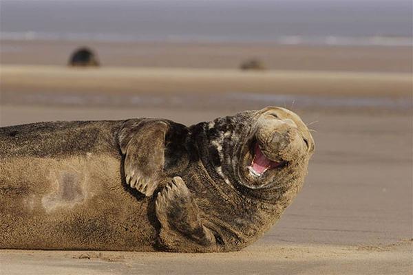 ニッコリ。幸せそうな笑顔が素敵な動物画像特集! (25)