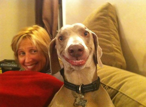 愛嬌たっぷりな笑顔を振りまくわんこ達!【犬画像】 (3)