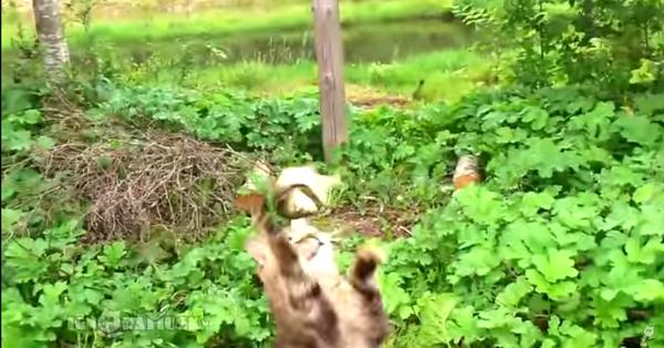 お魚を必死にゲットしようとする猫