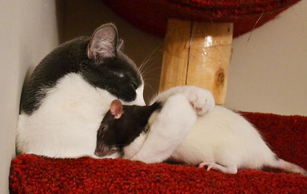 猫とネズミのお昼寝 2