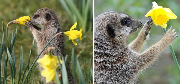 くんくん良い香り。花の匂いを嗅ぐ動物たちの画像 (6)
