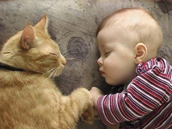 ペットは大切な家族!犬や猫と人間の子供の画像 (98)