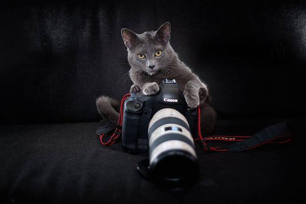 カメラに興味津々な動物の画像 (23)