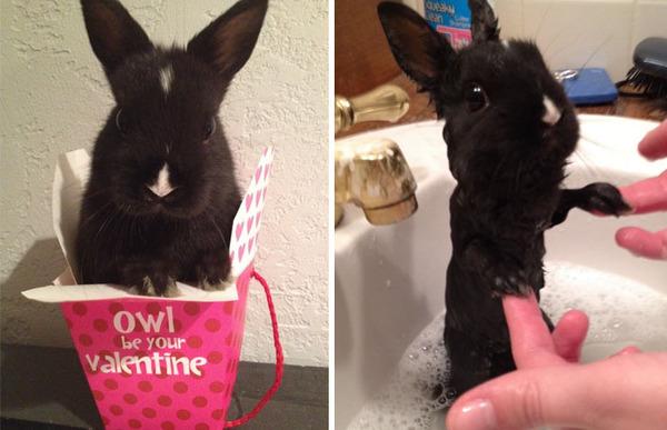 もふもふな動物たちがお風呂で変貌する…!【犬猫画像】 (26)