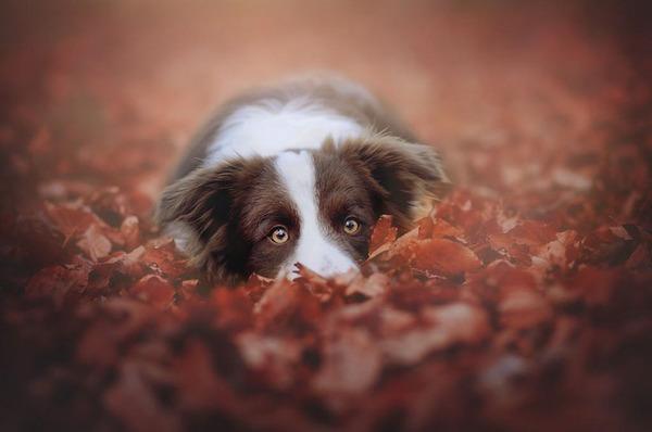 秋が来た!紅葉と遊ぶ犬画像 (3)