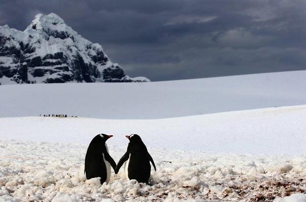 手を繋ぐペンギン