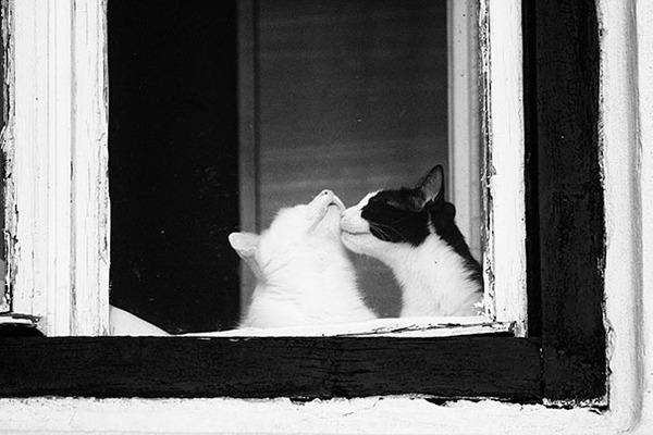 猫のバレンタインデー!【猫ラブラブ画像】 (22)