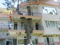 樹木を伐採せず建物の一部として取り入れた建築物のデザイン12種