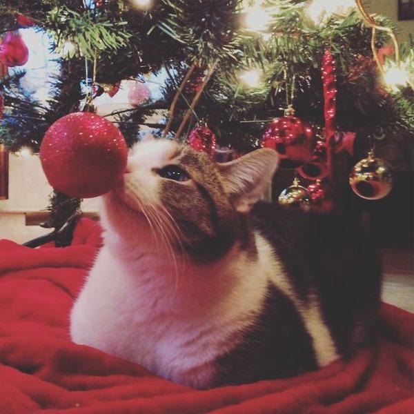 猫、あらぶる!クリスマスツリーに登る猫画像 (37)