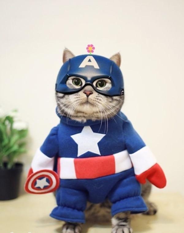 コスプレ猫!ハロウィンだし仮装した猫画像 (4)
