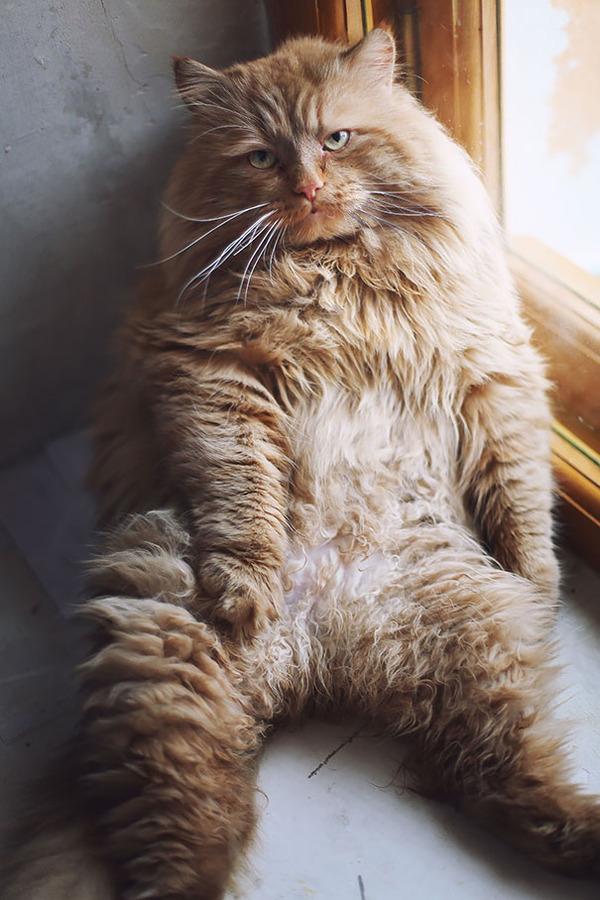 とても大きい猫の画像 10