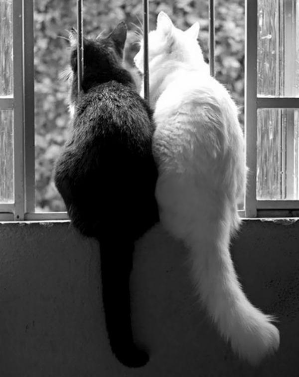 黒猫と白猫どっちが好き?どっちも可愛すぎ【猫画像】 (8)