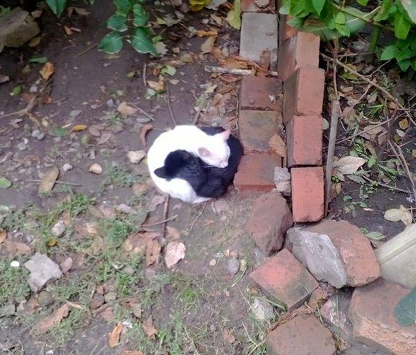 黒猫と白猫どっちが好き?どっちも可愛すぎ【猫画像】 (3)