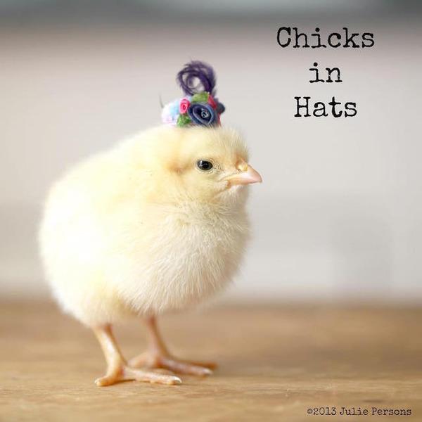 お洒落にきめるぜ!帽子を被ったヒヨコの画像 (13)