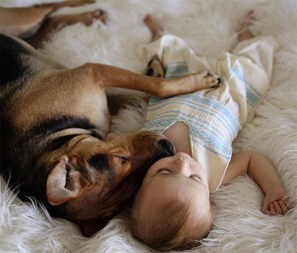 ペットは大切な家族!犬や猫と人間の子供の画像 (33)