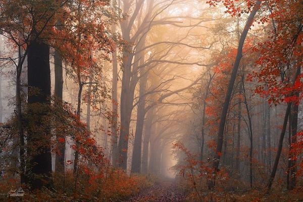 秋といえば紅葉や落葉の季節!美しすぎる秋の森の画像20枚 (13)