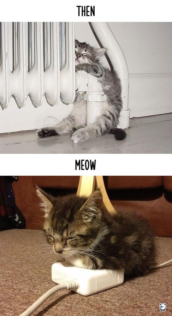 【猫画像】猫の生活を過去と現在で比較! (6)