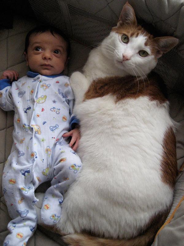 とても大きい猫の画像 28
