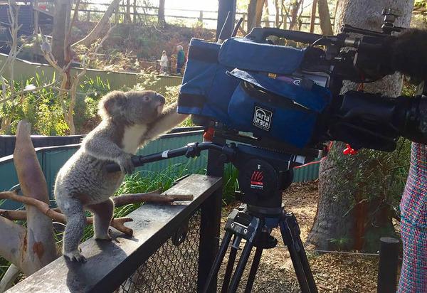 カメラに興味津々な動物の画像 (5)