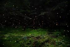 精霊が住んでいそう。星をオーバーレイした光の粒に包まれる森