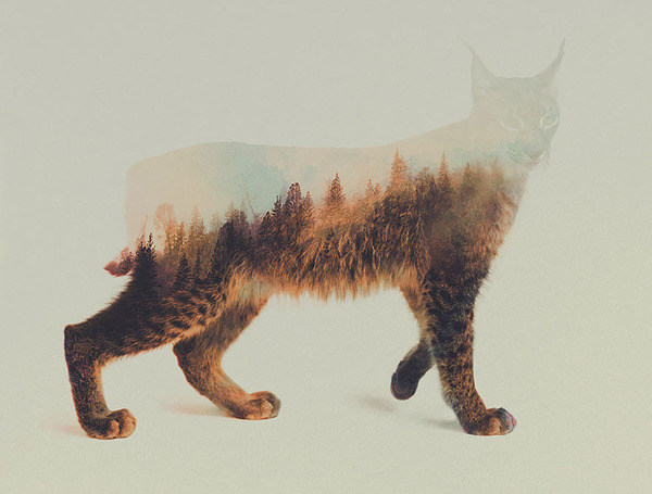 ボブキャットの二重露光写真byアンドレアス・リー