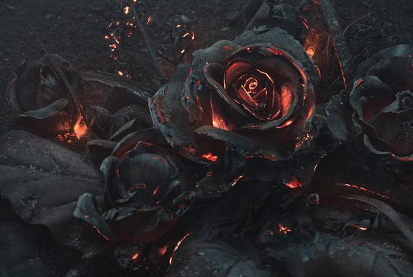 燻り燃える美しい薔薇 (3)