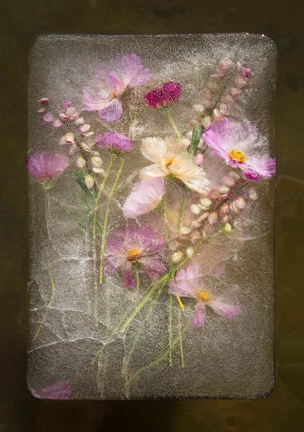 絵画的な美しさ。氷漬けになった花々の写真シリーズ (10)
