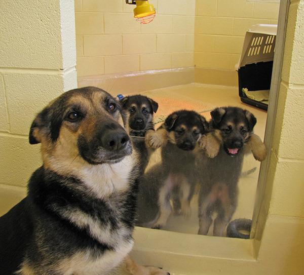 お母さん犬とその子犬達のソックリ集合写真!犬親子画像 (6)