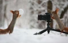 野生のリスが雪で遊びあう可愛い写真!