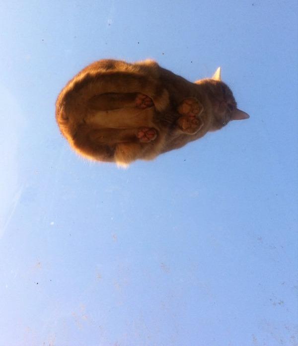 宙に浮かぶ猫