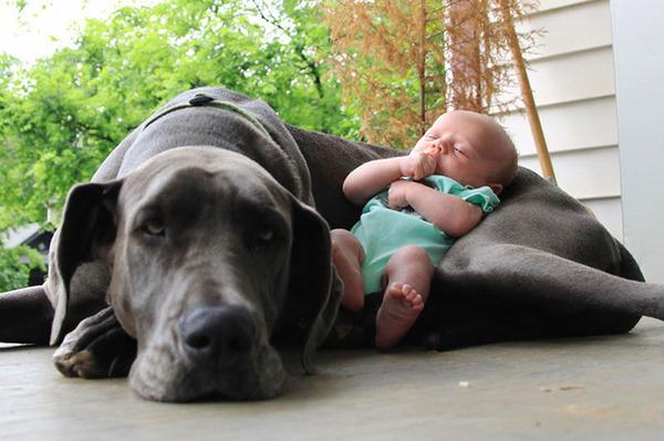 ペットは大切な家族!犬や猫と人間の子供の画像 (92)