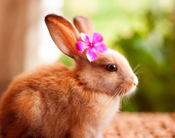 お花をつけたウサギ